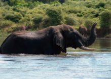 Zambia, un safari eccezionale