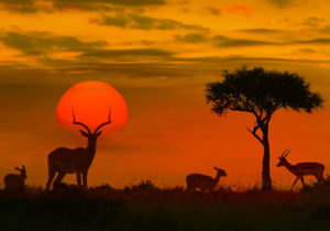 SPLENDIDA TANZANIA